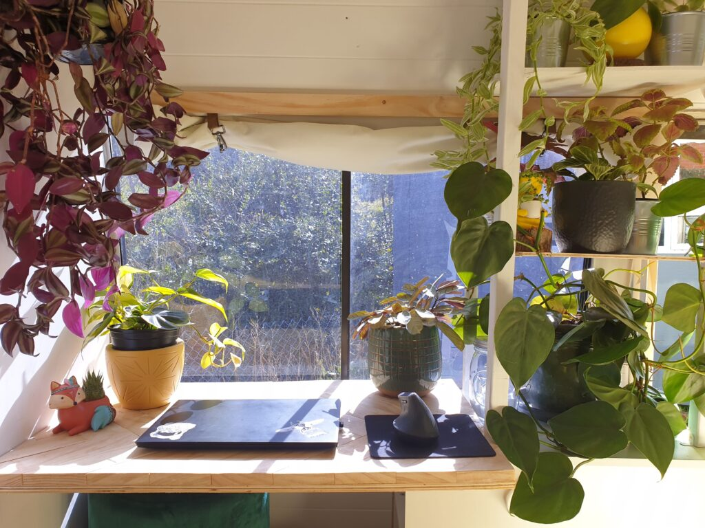 A desk in front of a window, with sunlight filtering through. On the desk is a laptop, and there are indoor plants all around and on the desk.